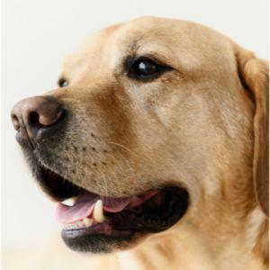 Prive honden trainer